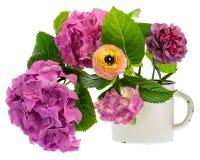 在水罐的八仙花属 图库摄影