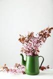 在水罐的春天开花的分支 免版税库存照片