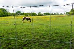 在滤网篱芭后的马 免版税库存图片