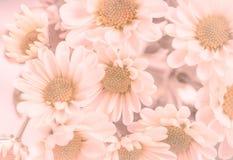 在紫罗兰色口气的花 库存图片
