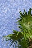 在紫罗兰色墙壁上的绿色热带植物 库存图片