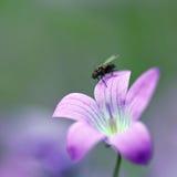 在紫罗兰色花的飞行 免版税库存照片