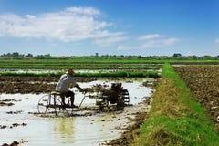 在稻耕种的翻土机 免版税库存图片