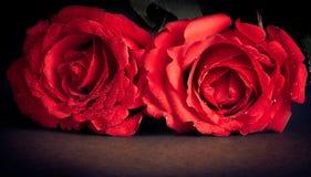 在黑背景、老牌、情人节和爱概念的两朵玫瑰 库存图片