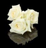 在黑背景的三朵白色芽玫瑰 库存照片