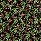 在黑背景的异乎寻常的热带花 无缝花卉的模式 水彩 免版税库存图片