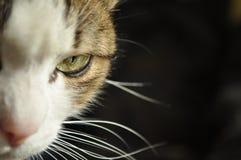 在黑背景的有床柱而无顶盖的猫 免版税库存图片