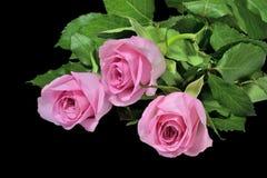 在黑背景的桃红色玫瑰花束 免版税库存图片