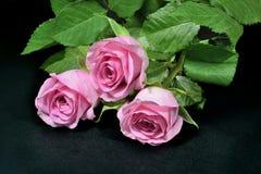 在黑背景的桃红色玫瑰花束 库存图片
