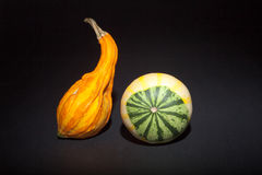 在黑背景的橙色和白色装饰南瓜 库存图片
