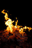 在黑背景的火焰 库存图片