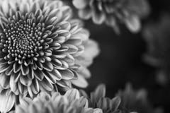 在黑背景的花在黑白 免版税库存照片