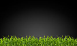 在黑背景的草 免版税库存照片