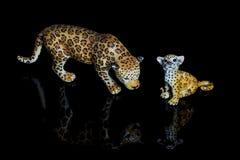 在黑背景的豹 免版税库存图片