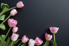 在黑背景的郁金香 免版税库存图片