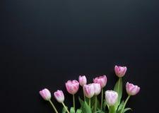 在黑背景的郁金香 免版税库存照片