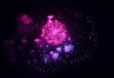 在黑背景的紫色和桃红色烟花 免版税库存照片