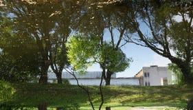 在水背景的绿色树反射 免版税库存照片