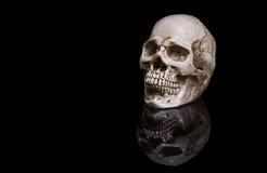 在黑背景的头骨与反射 库存图片