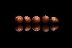 在黑背景隔绝的五颗榛子 库存图片