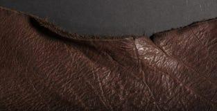 在黑背景隔绝的老葡萄酒褐色皮革 库存照片