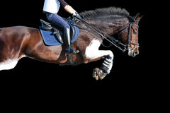 在黑背景隔绝的跳跃的马 免版税库存图片