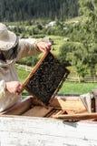 在细胞的蜂 免版税库存图片