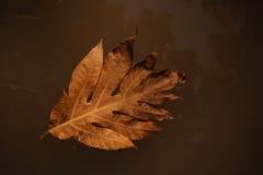在水自然背景的秋叶 免版税图库摄影