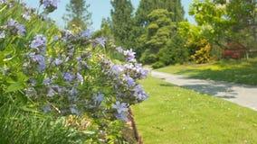 在绿色公园开花有迷离背景4K 股票视频