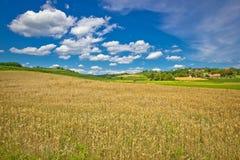 在绿色农业风景的金黄干草领域 库存照片