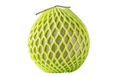 在绿色净泡沫保护的甜日本瓜在白色backg 免版税库存图片