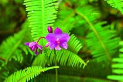 在绿色叶子中的兰花花 免版税库存图片