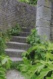 在绿色叶子中的砖台阶在公园,马斯特里赫特1 免版税库存照片