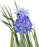 在绿色叶子例证的小深蓝花 免版税库存照片