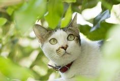在绿色叶子后的白色猫 库存照片