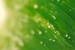 在绿色叶子宏指令的水下落 免版税库存图片