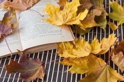 在黄色叶子的书 库存图片