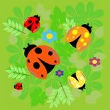 在绿色叶子的五只瓢虫 免版税库存照片
