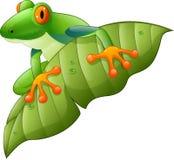 在绿色叶子的动画片红眼睛的亚马逊雨蛙 向量例证