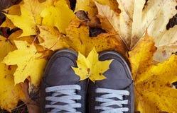 在黄色叶子的妇女的鞋子 免版税图库摄影