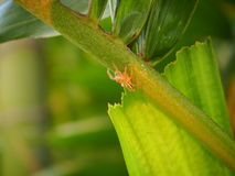 在绿色叶子的微小的蜘蛛 库存图片