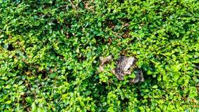 在绿色叶子的树桩 库存图片