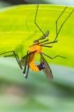 在绿色叶子的橙色昆虫 免版税图库摄影