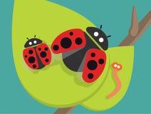 在绿色叶子的瓢虫家庭 库存图片