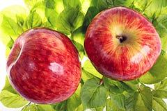 在绿色叶子的红色苹果 免版税图库摄影