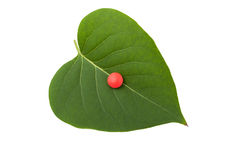 在绿色叶子的红色药片 免版税图库摄影