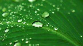在绿色叶子的雨下落 在雨以后的异乎寻常的庭院 雨季在热带 库存图片