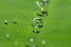 在绿色叶子的雨水下落 免版税库存图片