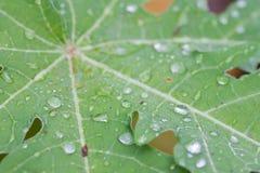在绿色叶子的露水或水下落 免版税库存照片