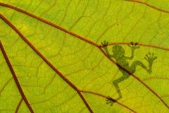 在绿色叶子的青蛙阴影 免版税库存照片